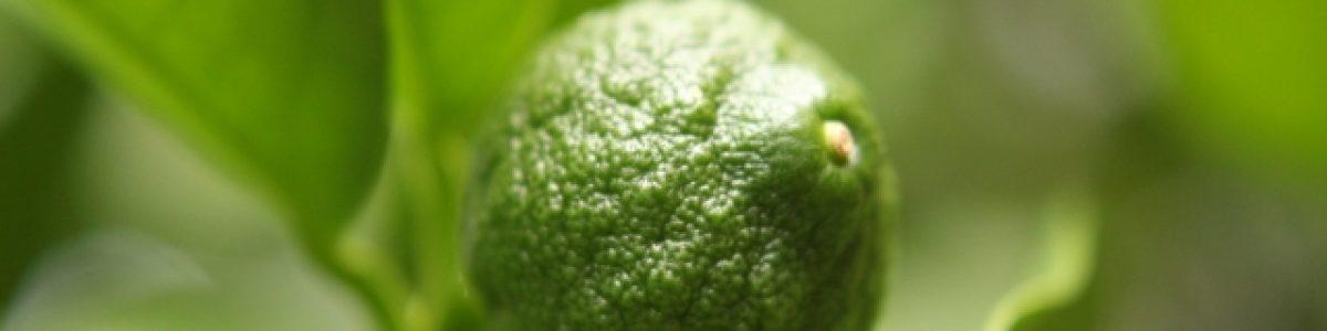 9 月19日 (火)izumiの調味料講座【柚子胡椒】 参加者募集中